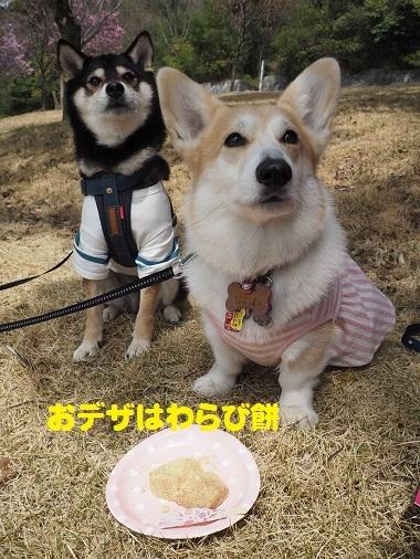9わらび餅