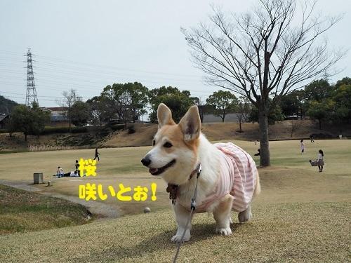 25桜みっけ