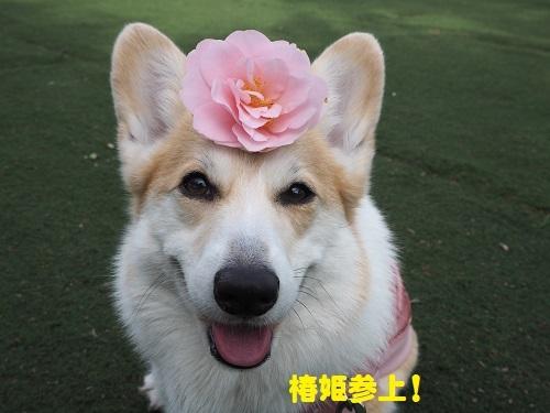42椿姫参上