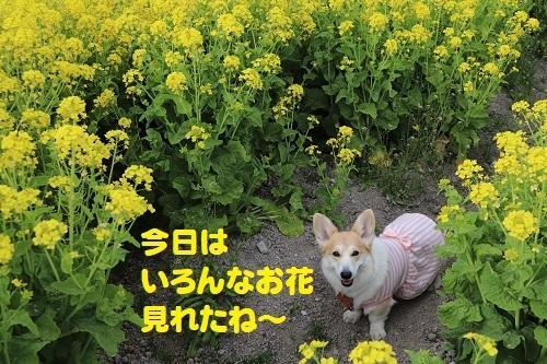 32いろんなお花