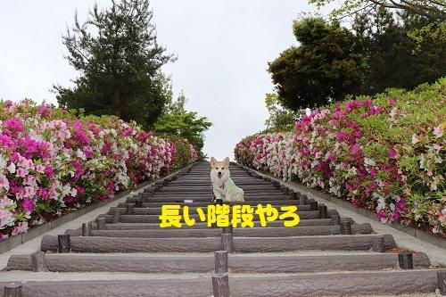 12長い階段