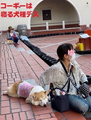 25寝る犬種