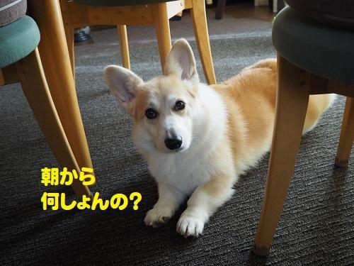 3何しょん