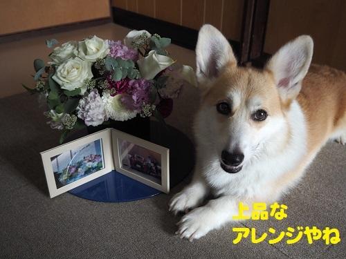 17上品な花