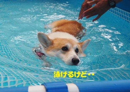 4泳げるけど