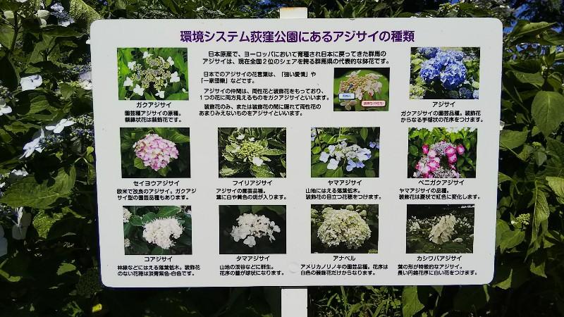 道の駅赤城の恵あじさい説明図202006