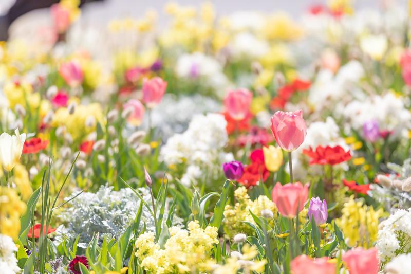 spring201943FTHG7170_TP_V4.jpg