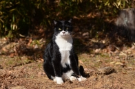 Mさん家の猫 ① 僕の名はハナです  2020 12 19
