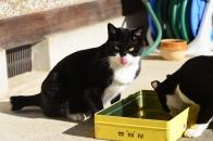 Mさん家の猫 ② 食事中なんですけど・・・  2020 12 19