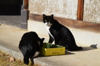 Mさん家の猫 ③ ダンディに撮ってください  2020 12 19