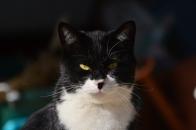 Mさん家の猫 ⑤ いやいやねむくないっす  2020 12 19
