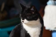 Mさん家の猫 ⑥ でももう限界でっす 2020 12 19