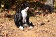 Mさん家の猫 ⑧ そうだ別荘へ行こう  2020 12 19
