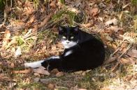 Mさん家の猫 ⑩ 野宿しますがなにか 2020 12 19