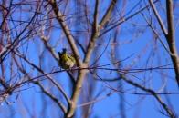 冬の野鳥 ① メジロ 明野村  2021 01 01