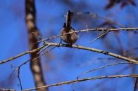 冬の野鳥 ③ エナガ 明野村  2021 01 01