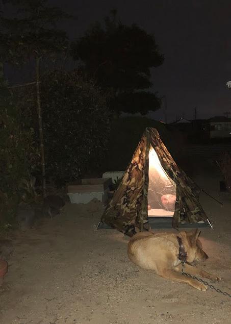 お庭キャンプ (6)
