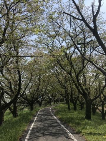 田口不動産 荒川サイクリング 2020