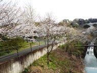 020404花川の桜 (18)18