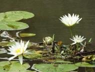 200912花のウォーキング (3)3