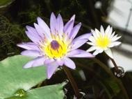 200912花のウォーキング (4)4