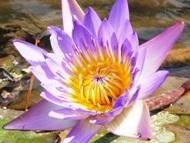 200912花のウォーキング (9)9