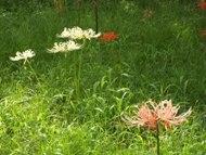 200912花のウォーキング (12)12