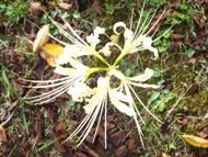200912花のウォーキング (15)15
