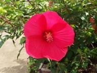200912花のウォーキング (17)17
