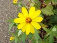 200912花のウォーキング (18)18