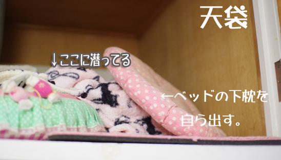 うtrtytyコピー