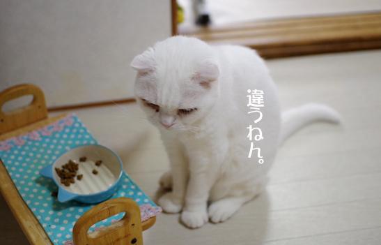 tsdvgfvxcっうぇうぇコピー