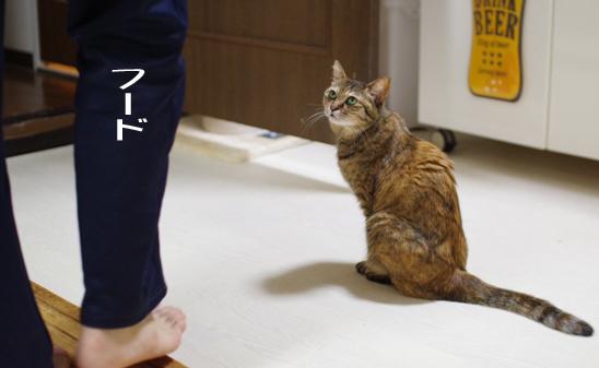 xsghfhfじゅいいいいうのコピー