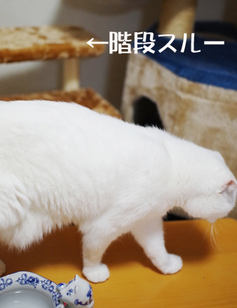 階段使わない^¥あsdのコピー