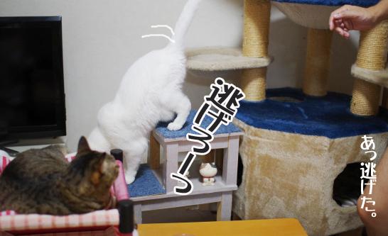 rrっれえっうぇうぇうぇうぇうぇうぇうぇ