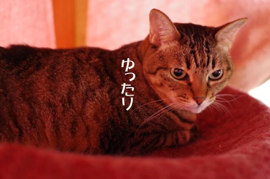 fdfsd454rふぇrうぇrwrうぇえwのコピー