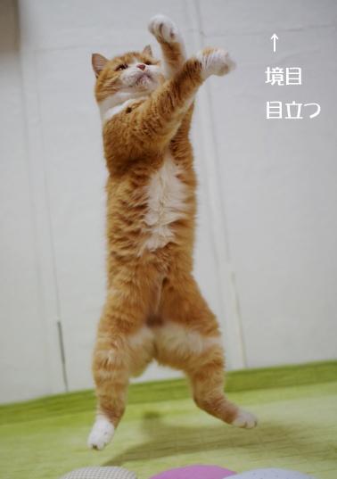 bvちゅyhjghjghjghjgコピー