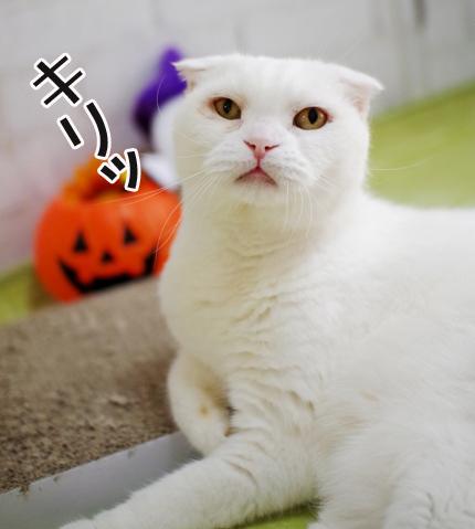 bokudaのコピー