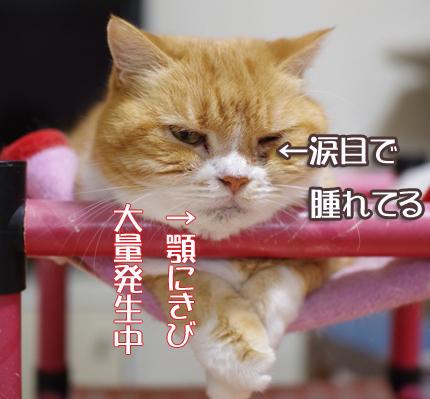 ytygひゅゆyコピー