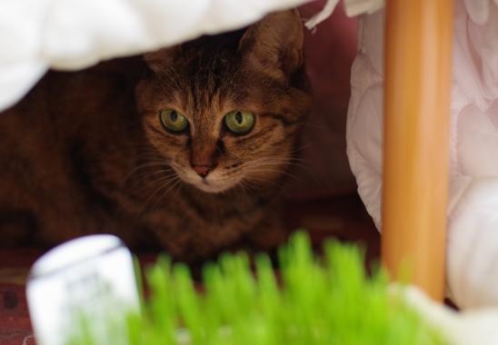 なんだ猫草か。s