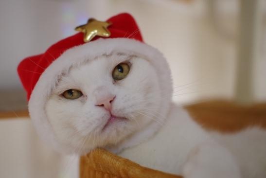 クリスマスイブはやっぱりコス撮影会