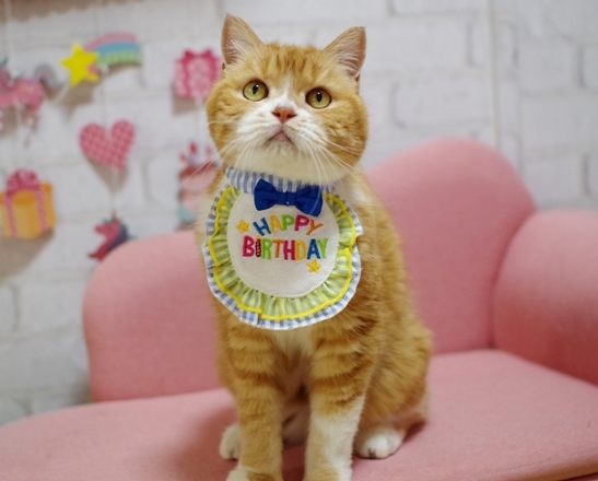 タマのご飯問題&ぷぷの誕生日ディナー