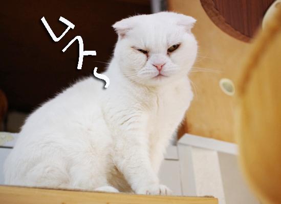 ひどい^¥うぇw^うぇうぇのコピー