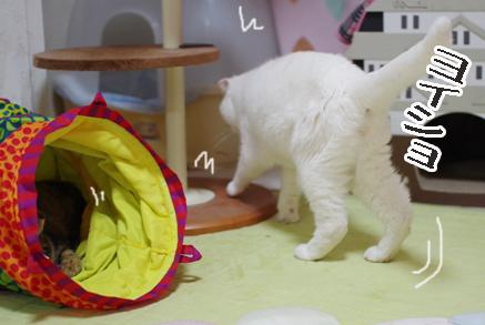 キララとタマさんドキドキの見つめ合い。