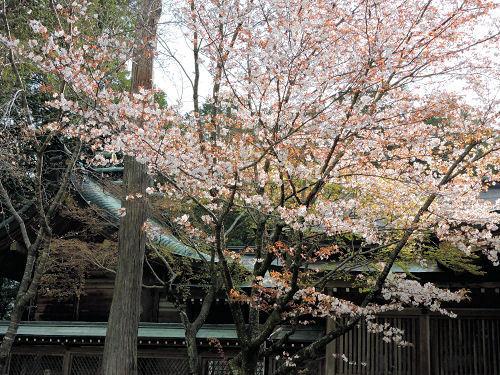 200413asahiko34.jpg