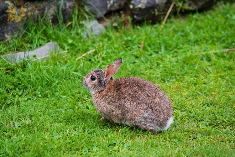 ニュージーランド 旅行 ウサギ