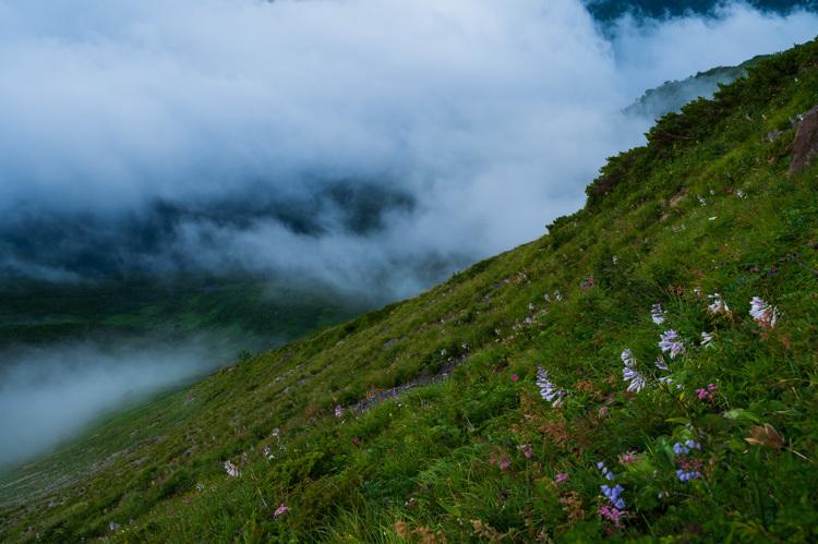 唐松岳 八方池 雲海 夜明け 高山植物 花