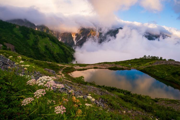 唐松岳 八方池 雲海 日の出 高山植物 花