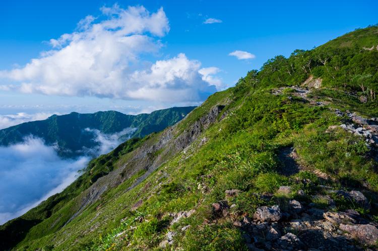 唐松岳 登山 トレッキング 八方池 下の樺