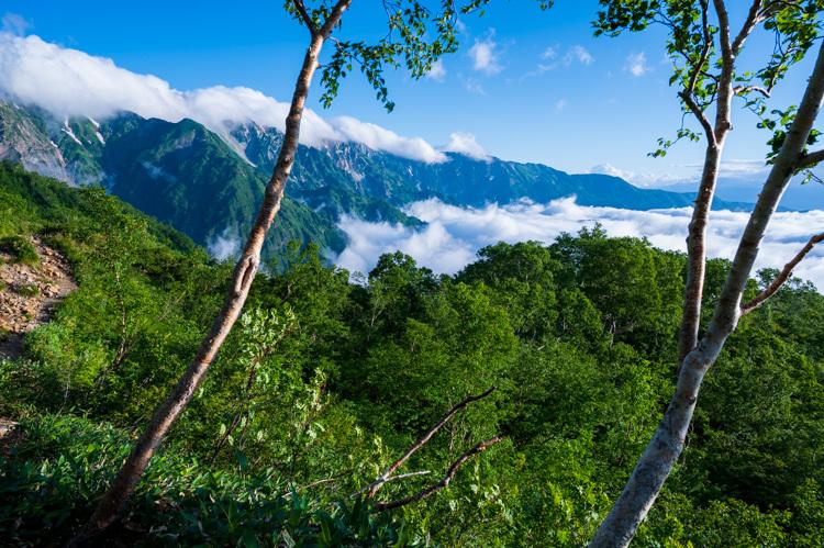 唐松岳 登山 トレッキング 下の樺 八方池 ダケカンバ